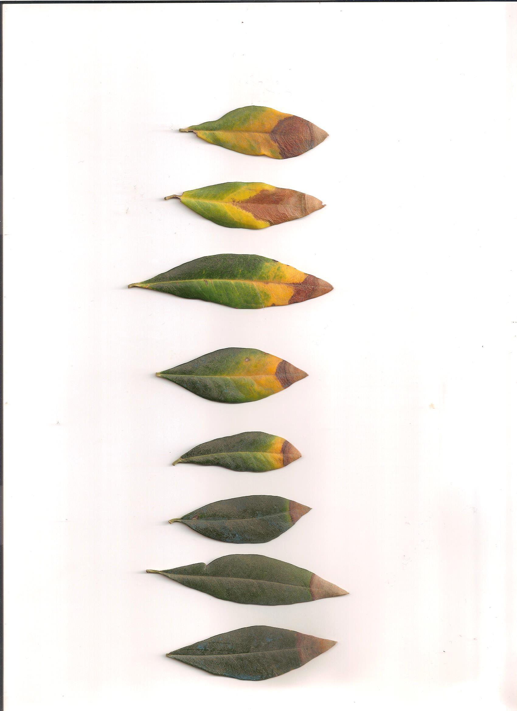 Calendario Dei Trattamenti Dellolivo.Associazione Interprovinciale Produttori Olivicoli Lombardi